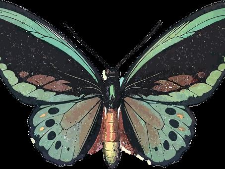 Estudio sobre la infección por mariposas