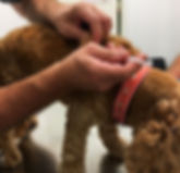 Dr Colin Tedman vaccinating a dog. Our Vet team perform a wide range of healthcare services.