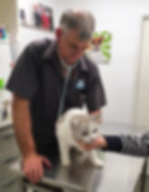 Cat Consultation health check at the vet clinic with Dr Colin Tedman of Caloundra Vet.