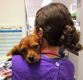 Post-operative dog care with Vet Nurse Cathy.
