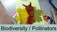 Biodiversity and Pollinators
