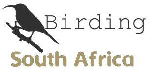 Birding SA.JPG