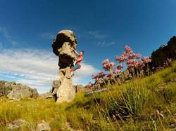 climb a Rock