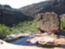 See this on both Waterfall and Kloof walks