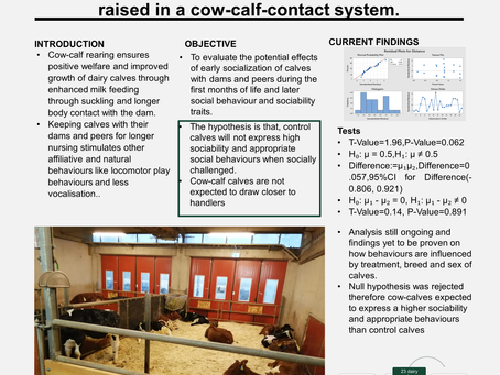 Sociability and social behaviour of dairy calves raised in a cow-calf-contact system
