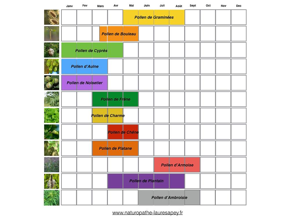 saison des pollens des arbres et plantes. Allergies saisonnières accompagnées par votre naturopathe  Laure Sapey