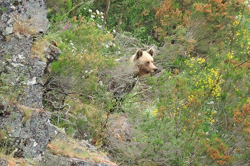 Visita al territorio del oso