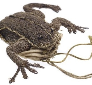 iris frog.jpg