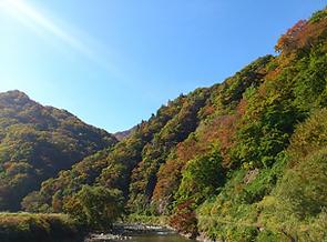 世界自然遺産白神山地