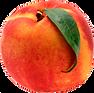 peach_edited.png