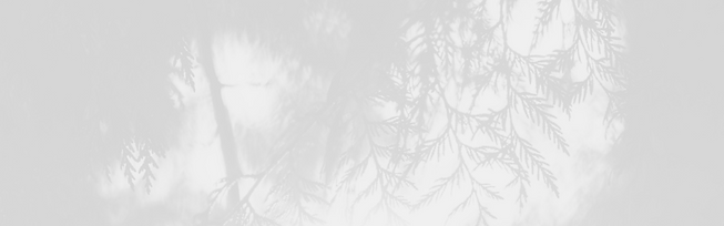 cedar-branches-gray-banner.png