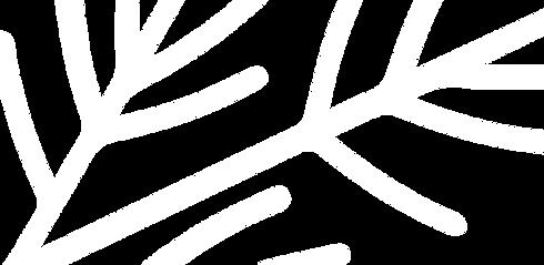 cedar-branch-watermark.png
