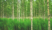 forest-896251_1920.jpg
