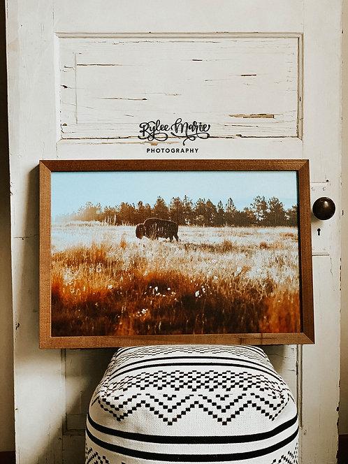 'Bison Sunrise' Wood Framed Print