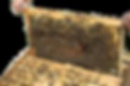 cadre-ruche-e1445463921102-300x200.png