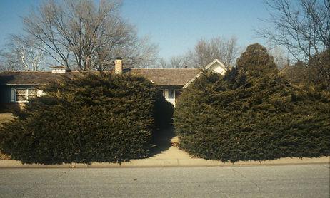 bigshrubs.jpg
