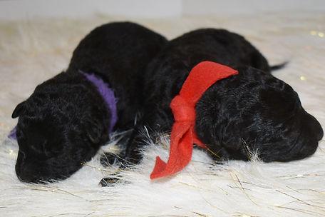 puppies 052.JPG