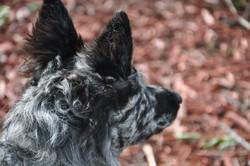 NE and Kisuze puppies 025