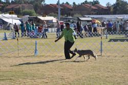herding trial 2014 012