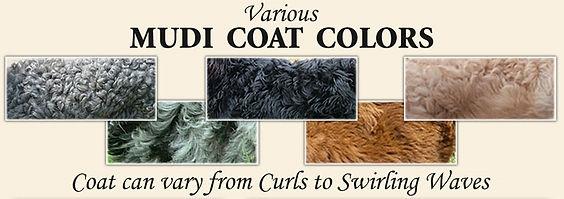 Mudi Coat