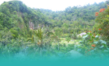 bali-jungle.jpg