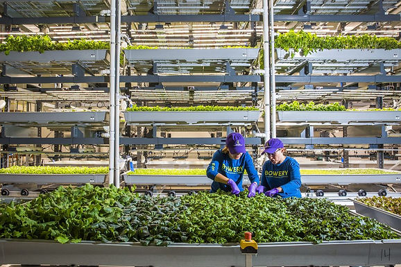 Bowery, the organic vertical farm startup