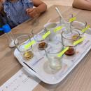酸性・アルカリ性実験