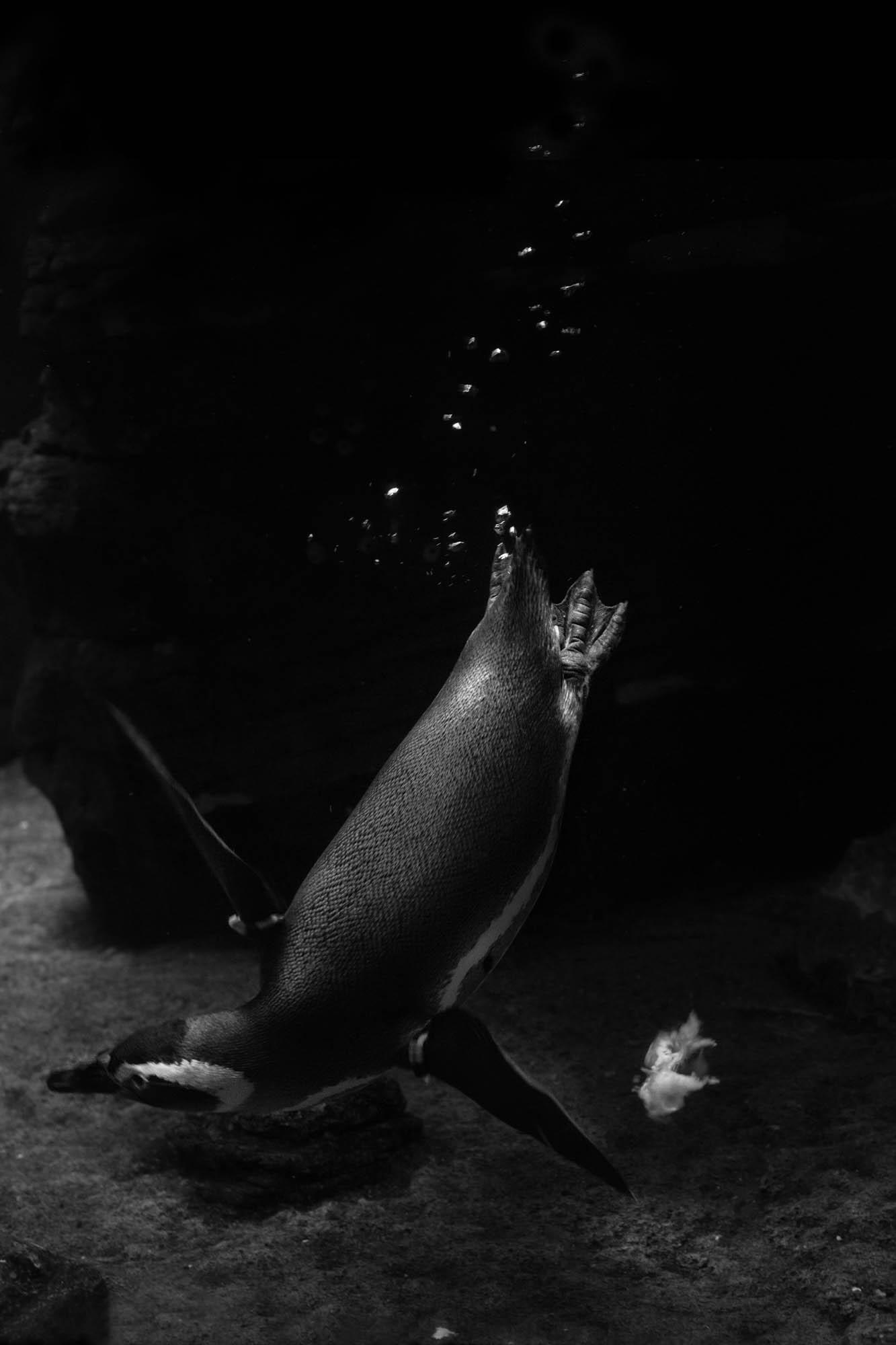 Notes of Nature: #aquarium #2