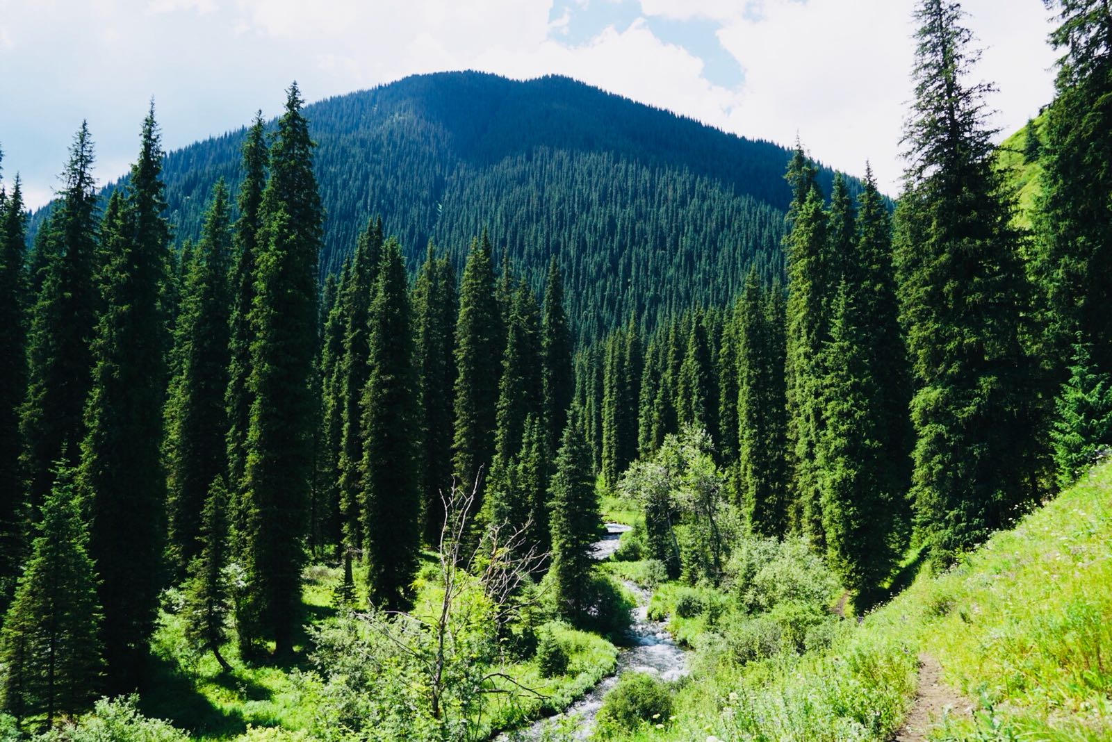 Coniferous forests in Kolsay Lakes