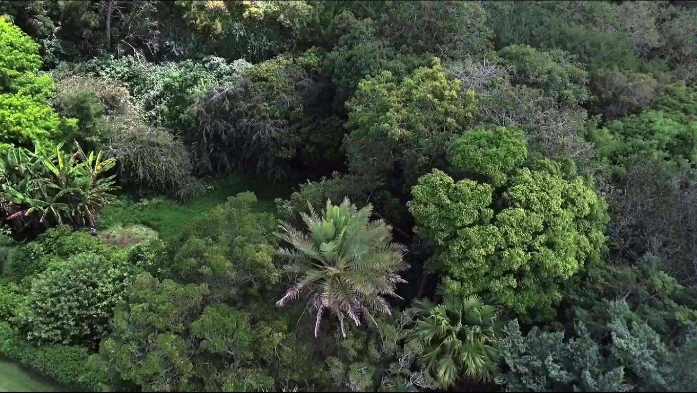 More Farm Lodge Trees