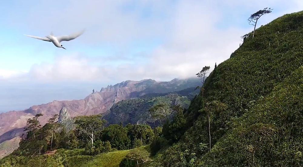 Fairy Tern and Lot, Sand Bay - St Helena island