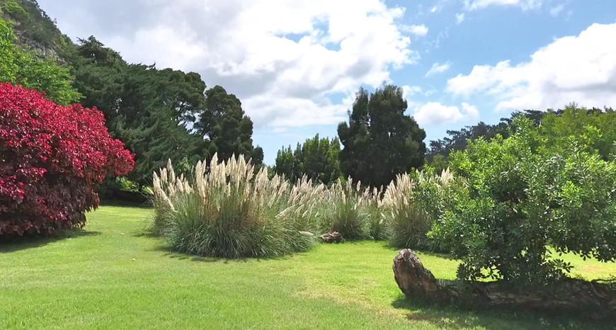 Farm Lodge Pampas Grass