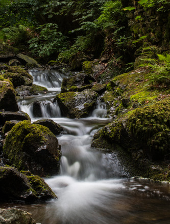 Tarn Hows - Lake District