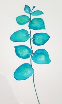Eucalyptus - watercolour