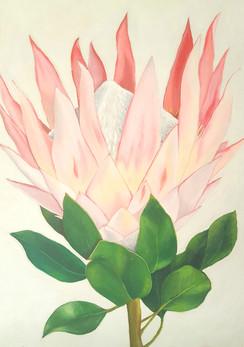 Protea - acrylic on canvas
