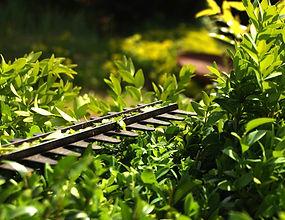 hedge-3393849_1920.jpg
