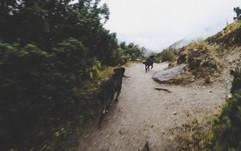 compañia en los Himalayas