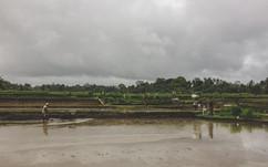 campos de arroz - Bali