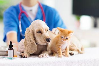 ペットの一般診療