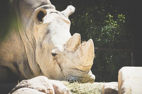 Zoo_Aquarium_006.jpg