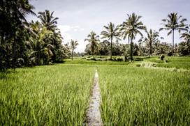 Bali_018.jpg