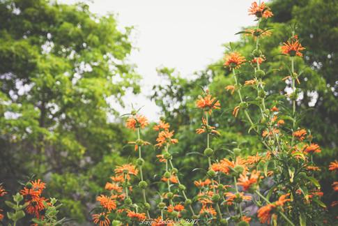 Ciudad_Del_Cabo_027.jpg
