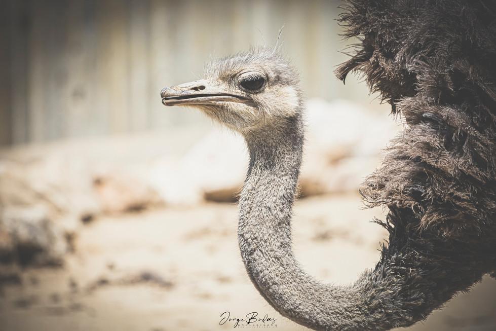 Zoo_Aquarium_007.jpg
