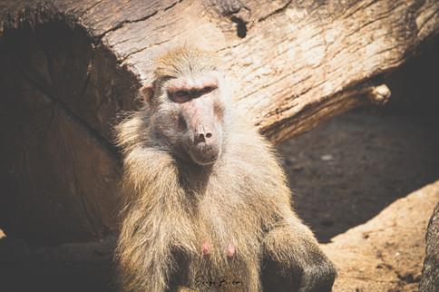 Zoo_Aquarium_009.jpg
