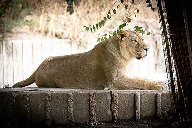 Zoo_Aquarium_005.jpg