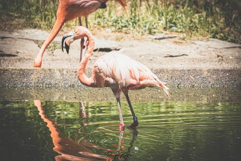 Zoo_Aquarium_015.jpg