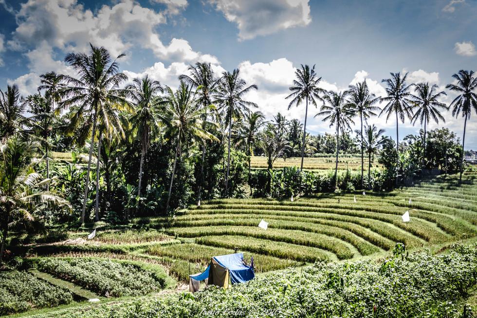 Bali_016.jpg