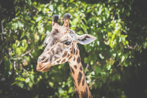 Zoo_Aquarium_030.jpg