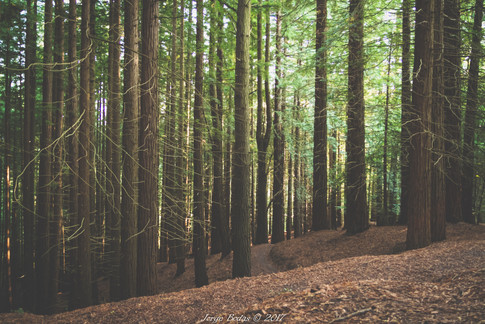 Cantabria_022.jpg