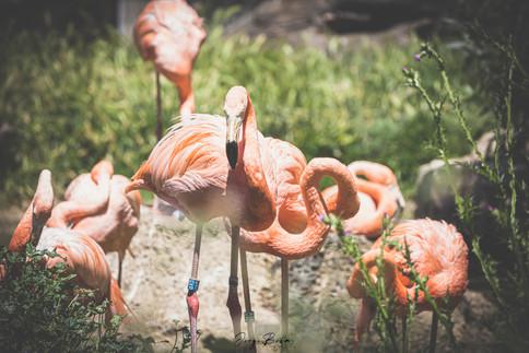 Zoo_Aquarium_014.jpg